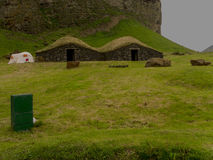 Isole Islanda di Vestmann Fotografia Stock Libera da Diritti