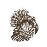 Isoleerde de schets vectorillustratie witte achtergrond turke Royalty-vrije Stock Afbeeldingen