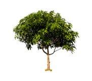 Isoleert van de mango royalty-vrije stock foto