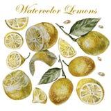 Isolement de citron d'aquarelle sur un fond blanc Photographie stock