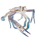 Isolement frais de crabe sur le blanc Photographie stock