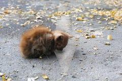 Isolerad övergiven kattunge Arkivbild