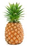 isolerad ananas Royaltyfria Foton