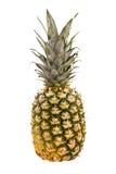 isolerad ananaswhite Arkivfoton