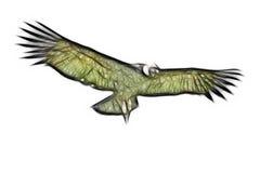 isolerad andean condor Arkivbilder