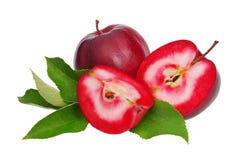 Isolerad Apple red Royaltyfria Foton