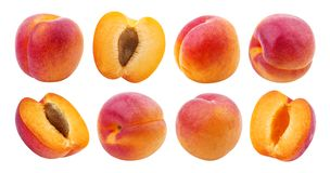 isolerad aprikos Samling av aprikors som isoleras på vit bakgrund arkivbilder