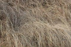 Isolerad bakgrund av torrt gräs Grå grästextur royaltyfri foto