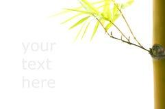 Isolerad bambu med copyspace för textavsikt och passande urklipp Royaltyfri Bild