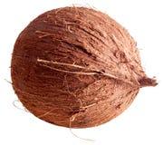 Isolerad bild av kokosnöten Royaltyfria Bilder