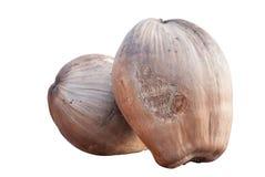Isolerad bild av kokosnötter Arkivfoto