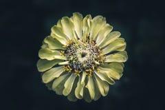 Isolerad blom Royaltyfri Foto