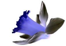 isolerad blomma Fotografering för Bildbyråer