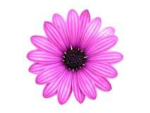 isolerad blomma royaltyfri foto