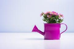 Isolerad blomma i en purpurfärgad tenn- can arkivfoton