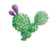 Isolerad blommig kaktus Arkivbilder