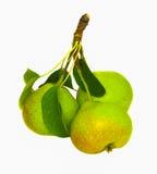 Isolerad branche med päron Arkivbilder