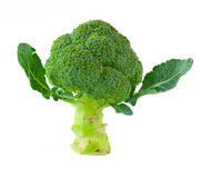 isolerad broccoli Arkivfoto