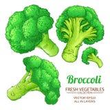 Isolerad broccolivektor stock illustrationer