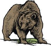 Isolerad brunbjörn Royaltyfria Bilder