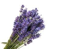 Isolerad bukett av lavendel Royaltyfria Bilder