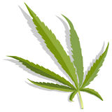 Isolerad cannabisbladvektor Royaltyfri Bild