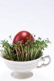 Isolerad cress i litet kuper med det easter ägget på vitbakgrund - closeup Royaltyfria Bilder
