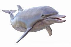 isolerad delfin Royaltyfri Bild