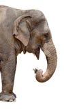 isolerad elefant Royaltyfri Bild