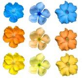Isolerad färgrik blomma Arkivfoto