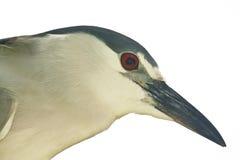 isolerad fågel Arkivbild