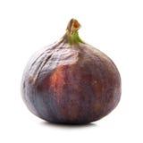 Isolerad fikonträdfrukt Royaltyfri Bild