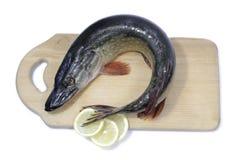 Isolerad fiskpik Royaltyfria Bilder