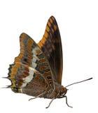 isolerad fjäril Arkivfoton