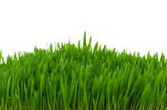 isolerad glass green Arkivfoton