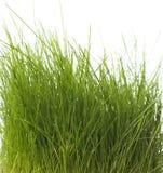 isolerad gräsgreen Royaltyfri Bild