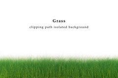 isolerad gräsgreen Arkivfoton