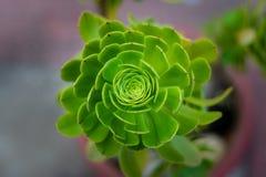 Isolerad grön blomma med mest unikt enkelt för form arkivbild