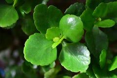 Isolerad grön leaf Arkivfoton