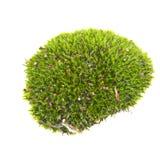 Isolerad grön mossa Royaltyfri Foto