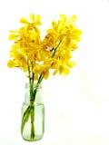 Isolerad gul orkidé   Arkivfoton