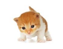 Isolerad gullig orange röd kattunge arkivbilder