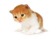 Isolerad gullig orange röd kattunge fotografering för bildbyråer