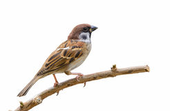 Isolerad härlig fågel arkivbilder