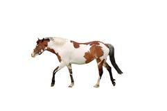 isolerad häst Royaltyfria Foton