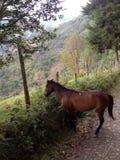 isolerad häst Arkivfoto