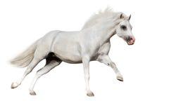 Isolerad hästkörning Royaltyfri Bild
