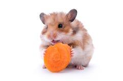 isolerad hamster Royaltyfri Fotografi