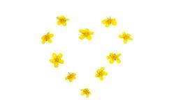 Isolerad hjärta av gula blommor Arkivfoto