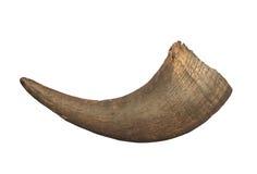 Isolerad horn för amerikansk bison Royaltyfri Fotografi